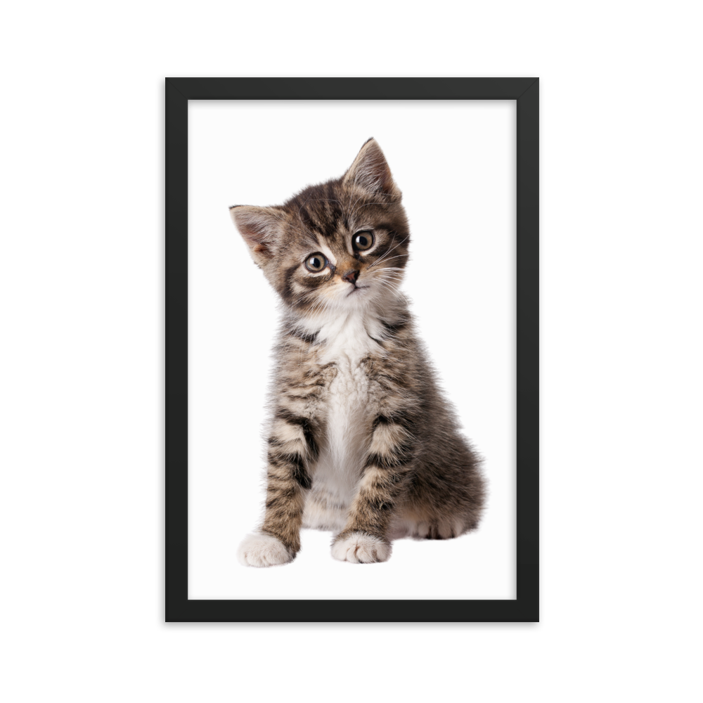 Cat Face Posters Collection