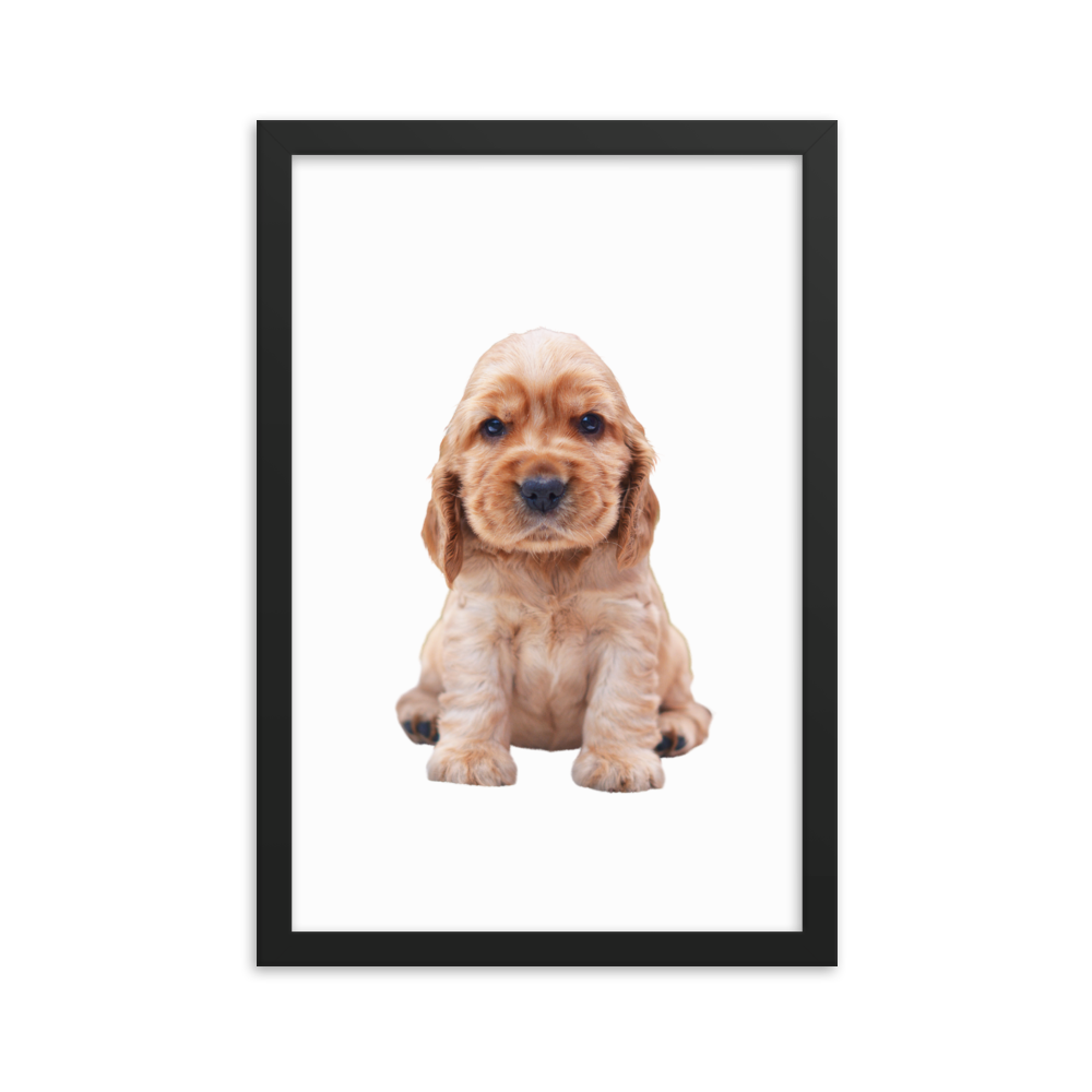 Dog Face Posters Collection